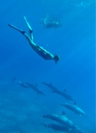 Timeless Bliss with Dolphins