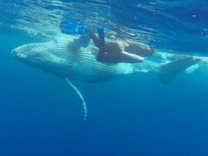 Trish nearly hugged by this amazing baby whale